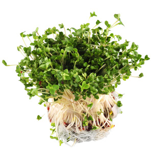 Broccoli Sprouts 30g