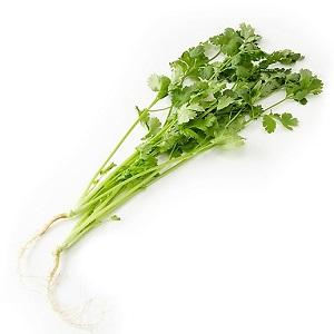 Fresh coriander 30g