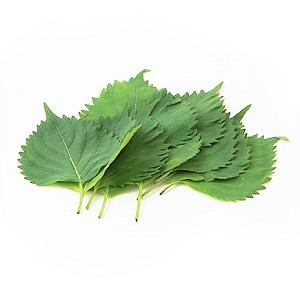Oba Perilla 10 leaves(Miyazaki)