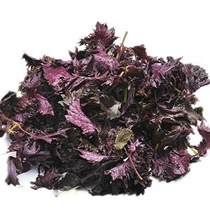 夏季消暑料理必備 赤紫蘇 300g (和歌山縣或奈良縣産)