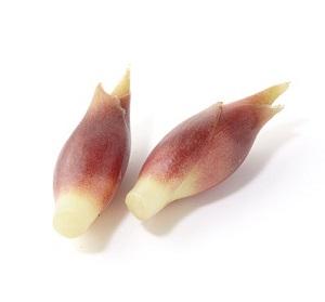 天然清涼風味 茗荷 2個 30g (高知縣産)
