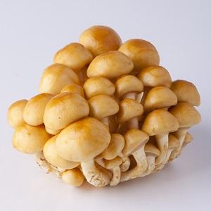大粒有咬口 足長滑子菇 100g (長野縣産)