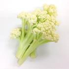 柔軟清甜 長椰菜花莖 150g (和歌山縣産)
