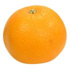 清新爽口的酸甜口味 夏紅柑橘 2~3個 400g(広島県産)