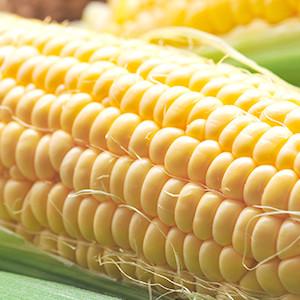 Sweet Corn 280g (Saitama)