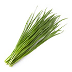 製成涼菜簡單美味 韭菜 100g (高知縣産)